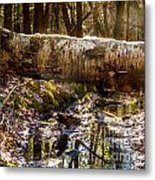 Tree Walk Metal Print