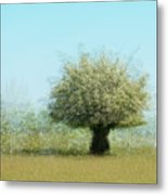 Tree With Flowers Metal Print