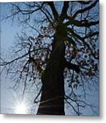 Tree With Sun Metal Print