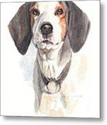 Treeing Walker Coonhound Metal Print