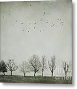 Trees And Birds Metal Print