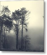 Trees And Fog At Castle Hill Metal Print