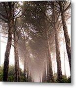 Trees And Mist Metal Print