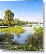 Trees And Reeds Close To The River Metal Print