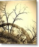 Trees And The Curve Of The Earth Metal Print