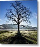 Trees Are Us Metal Print by Sean Foster