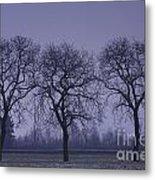 Trees At Night Metal Print