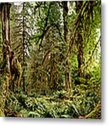 Trees At Olympic National Forest Metal Print