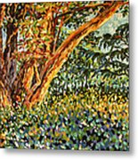 Trees At Sunset In Lafayette Park Metal Print