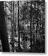 Trees Bw Metal Print by Nelson Watkins