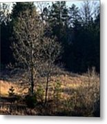 Trees By The Wayside Metal Print