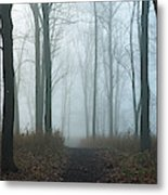 Trees During Autumn In Forest, Dupage Metal Print