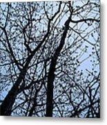 Trees From Below Metal Print