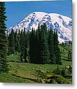 Trees In A Forest, Mt Rainier National Metal Print