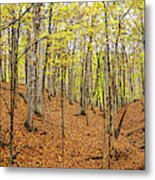 Trees In A Forest, Stephen A. Forbes Metal Print