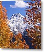 Trees In Autumn, Colorado, Usa Metal Print