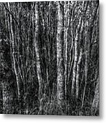 Trees In Black And White Metal Print