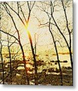 Trees In Marsh, Maine, Usa Metal Print