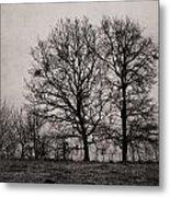 Trees In November Metal Print