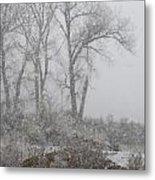 Trees In Snow Metal Print