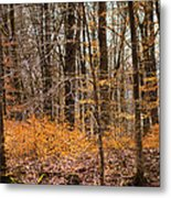 Trees In The Forest In March With Orange Leaves Metal Print