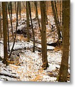 Trees In The Forest In Winter Brown And Orange Leaves Metal Print