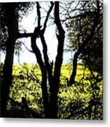 Trees In The Forest Metal Print