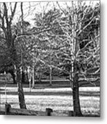 Trees In The Park Metal Print