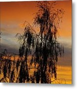 Trees In The Sunset Metal Print