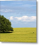 Trees In Wheat Field Metal Print