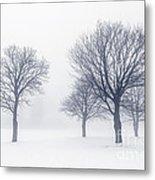 Trees In Winter Fog Metal Print by Elena Elisseeva