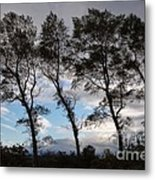 Trees Metal Print by Louise Heusinkveld