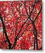 Trees Of Autumn Metal Print