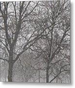Trees Of Silence Metal Print