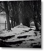 Trees Of The Ida Valley  Metal Print
