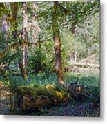 Trees Of The Rainforest Metal Print
