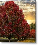 Trees On Fire Metal Print
