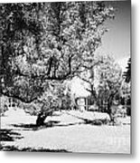 Trees On The Old Parade Ground Inside Fort Jefferson Dry Tortugas Florida Keys Usa Metal Print