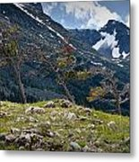 Trees On Top Of A Ridge At Glacier National Park Metal Print