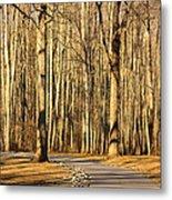 Trees Shadows Metal Print