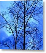 Trees So Tall In Winter Metal Print