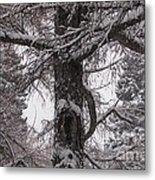 Trees Under Snow Metal Print