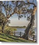 Trees With A View Metal Print