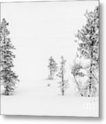 Trees With Hoar Frost Metal Print