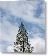 Treetop Metal Print
