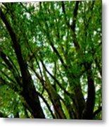 Treetops 2 Metal Print
