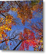 Treetops In Fall Forest Metal Print