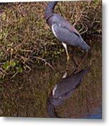 Tri-colored Heron 1 Metal Print