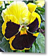 Tricolor Pansy Metal Print