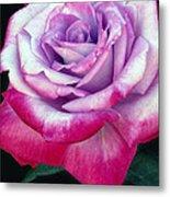Tricolor Rose Metal Print